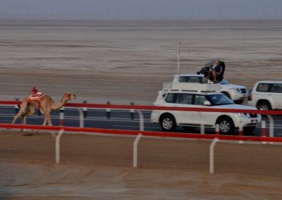18_CAMEL_RACING_ABU_DHABI_CUSTOMISED
